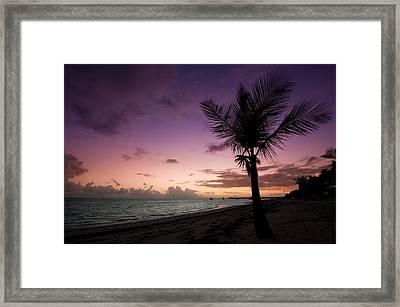Palm Tree Sunrise Framed Print by Sebastian Musial