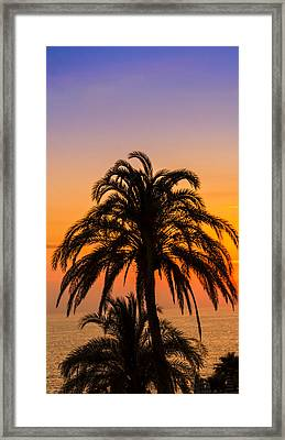 Palm Tree Sunset Vertical Framed Print