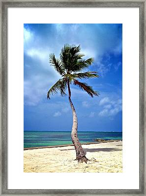 Palm Tree Swayed Framed Print by Kristina Deane