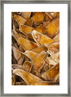 Palm Tree Trunk Detail Framed Print by Bob Phillips