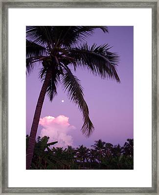 Palm Tree With Moon Framed Print by Marianne Miles