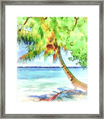 Palm Tree Framed Print by Yury Malkov