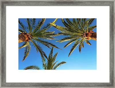 Palm Trees Against A Blue Sky Framed Print by Wladimir Bulgar