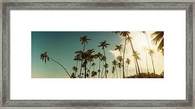Palm Trees Along The Beach In Morro De Framed Print by Panoramic Images