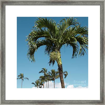 Palm Trees And Blue Sky Framed Print by Sharon Mau