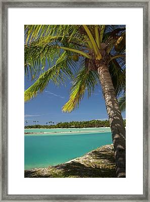 Palm Trees And Lagoon Entrance, Musket Framed Print by David Wall