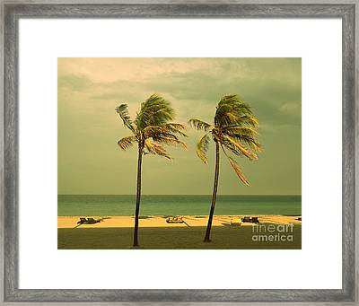 Palm Trees At Hallendale Beach Framed Print