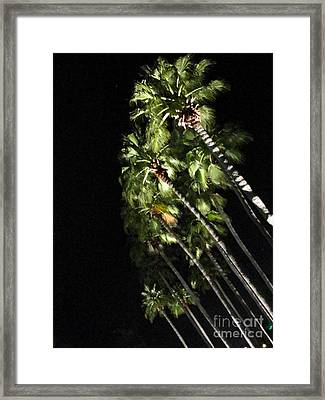 Palm Trees At Night Framed Print by Gayle Melges