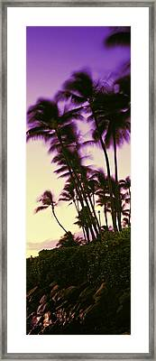 Palm Trees At Sunset, Oahu, Hawaii, Usa Framed Print