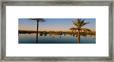 Palm Trees At The Lakeside, Phoenix Framed Print