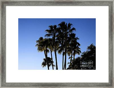 Framed Print featuring the photograph Palm Trees by Chris Thomas