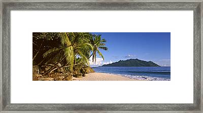 Palm Trees Grow Out Over A Small Beach Framed Print