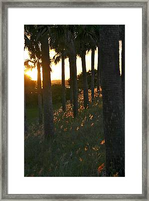 Palm Trees In Silhouette Framed Print