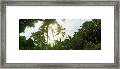 Palm Trees In The Forest At Coast Framed Print by Panoramic Images