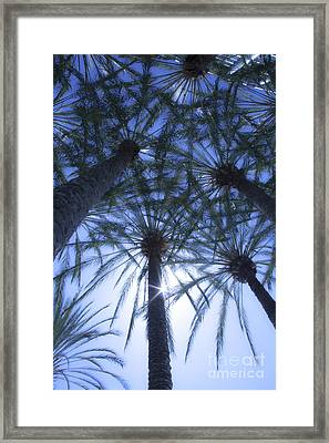 Framed Print featuring the photograph Palm Trees In The Sun by Jerry Cowart