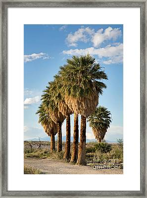 Palm Trees Framed Print by Jane Rix