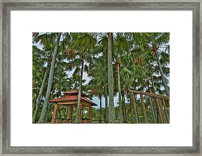 Palm Trees Framed Print by Mario Legaspi