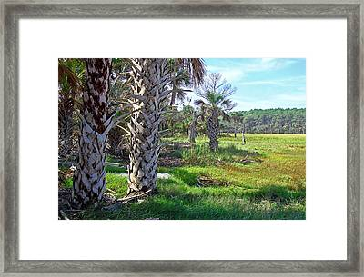 Framed Print featuring the photograph Palm Trees On Hunting Island by Ellen Tully