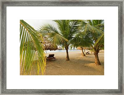 Palm Trees On Sandy Beach, Placencia Framed Print