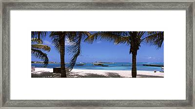 Palm Trees On The Beach, Anguilla Framed Print