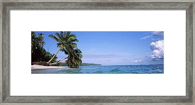 Palm Trees On The Beach, Indonesia Framed Print