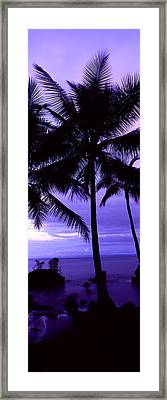Palm Trees On The Coast, Colombia Framed Print
