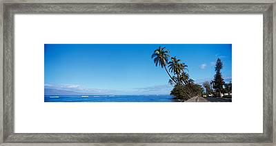 Palm Trees On The Coast, Lahaina, Maui Framed Print by Panoramic Images