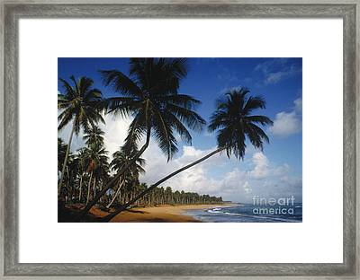 Palm Trees. Puerto Rico Framed Print by Tim Holt