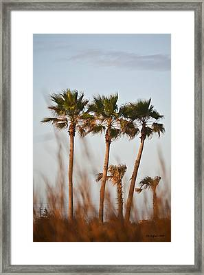 Palm Trees Through Tall Grass Framed Print