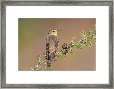 Palm Warbler  Framed Print by Daniel Behm