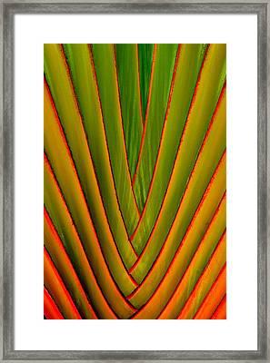 Palm Weave Fine Framed Print