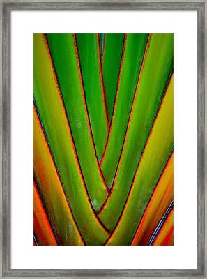 Palm Weave Grande Framed Print