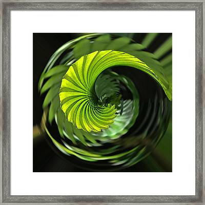 Palmetto Nautilus Framed Print