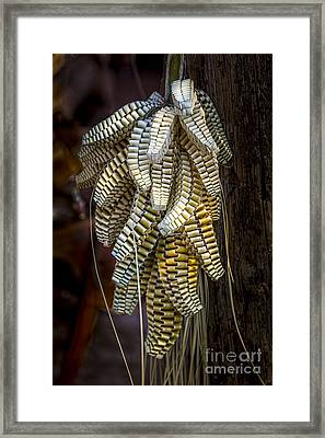 Palmetto Weave Framed Print by Marvin Spates