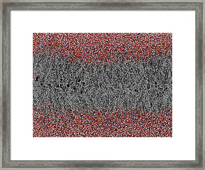 Palmitoyloleoyl Pe Lipid Bilayer Framed Print by Laguna Design