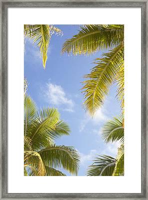 Palms And Sky Framed Print by Brandon Tabiolo
