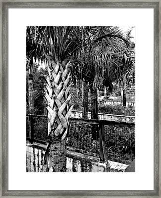 Palms And Walls In Black And White Framed Print by K Simmons Luna