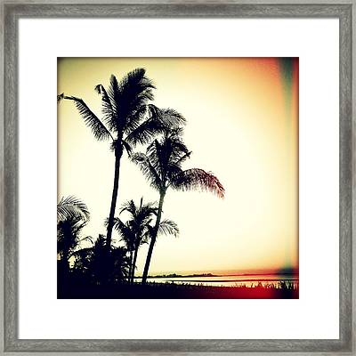 Palms At Dawn I Sunset Framed Print