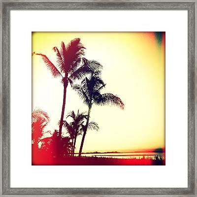 Palms At Dawn II Sunset Framed Print
