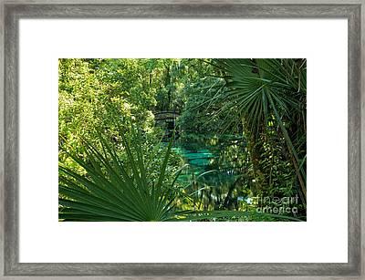 Palms At Fern Hammock Framed Print by Adam Jewell