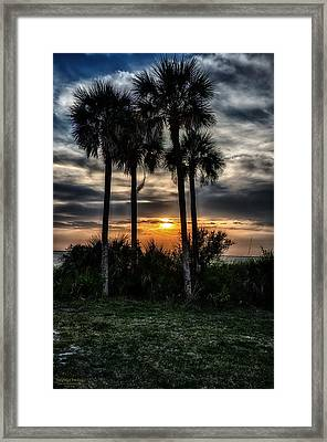 Palms At Sunet Framed Print by Michael White