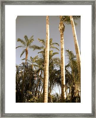 Palms Framed Print by Brynn Ditsche