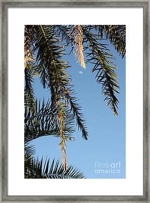 Palms In The Wind Framed Print by AR Annahita