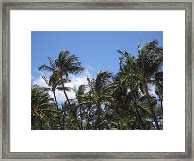 Palms In The Wind Framed Print