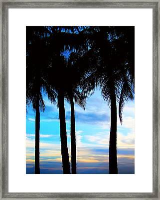 Palms Framed Print by Kara  Stewart