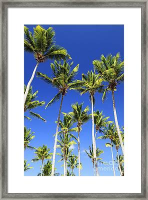Palms On Blue Sky Framed Print by Elena Elisseeva