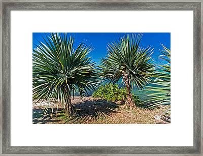 Palms On The Beach. Mauritius Framed Print