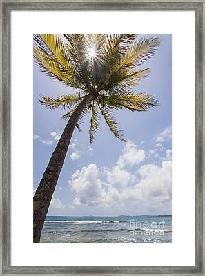 Framed Print featuring the photograph Palms Trees Along Luquillo Beach In Puerto Rico by Bryan Mullennix