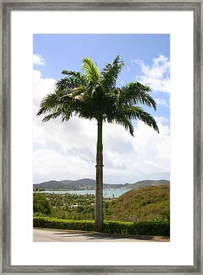 Palmtree In The Carribean Framed Print by Anja Van Impe