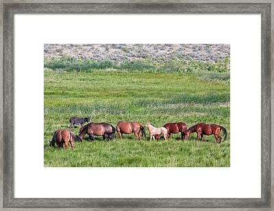 Palomino Filly Framed Print
